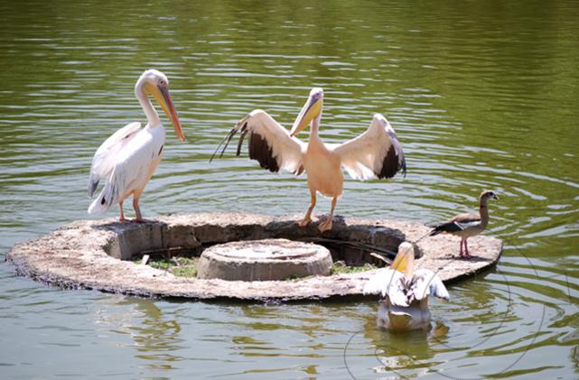 varna-zoo